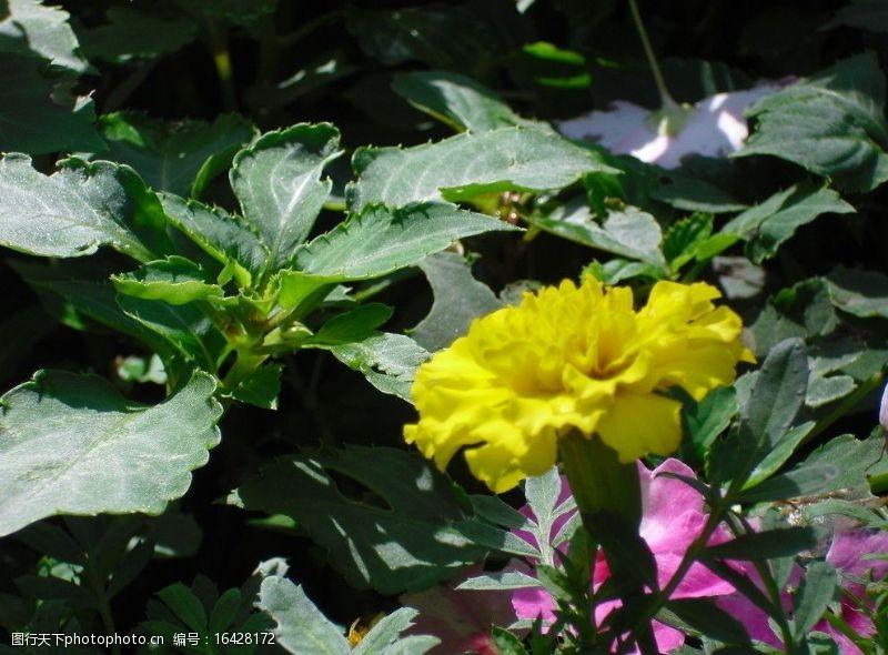 万绿丛中一点黄图片