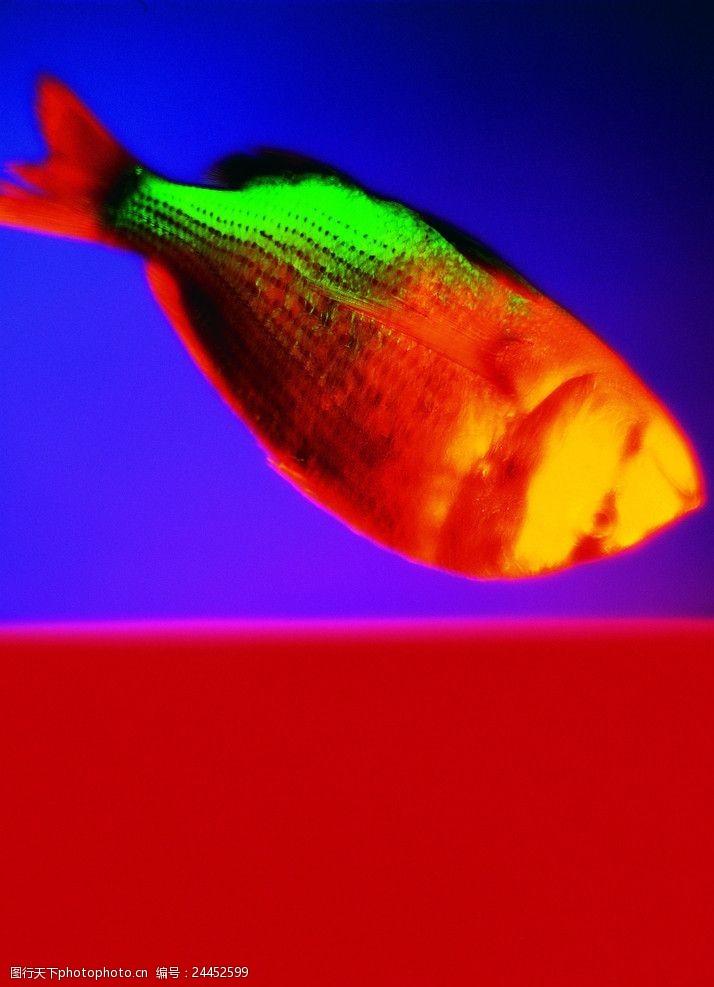 综合创意抽象的鱼