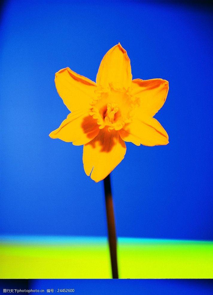 综合创意花朵