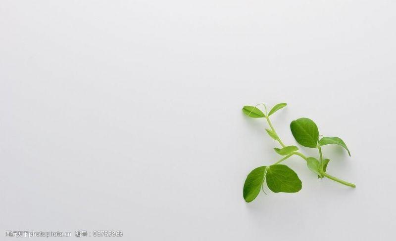 树叶图片免费下载绿色小树叶图片