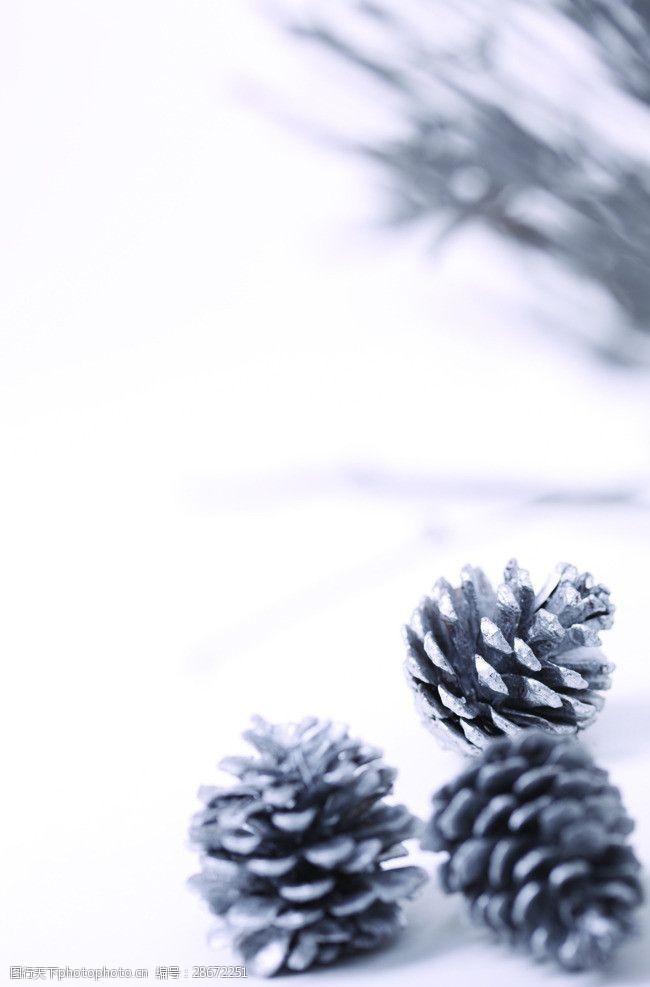 圣诞元素集合松子果圣诞元素